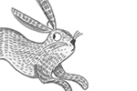 Ashley King Illustration - shley, king, ashley king, illustrator, fiction, picture book, mass market, young reader, YA, coloured crayon, detailed, black and white, rabbit, animal, cute, b+w
