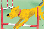 Jennifer Farley Illustration - jennifer farley, photoshop, digital, mass market, commercial, fiction, young reader, YA, trade, colour, colourful, picture book, non-fiction, educational, dog, pets, animals, cute, sweet, agility, course, running, hurdles, vet, happy, run, excited,