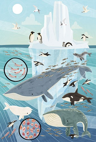 Brendan Kearney Illustration - brendan, kearney, brendan kearney, illustration, colourful, digital, photoshop, hand-drawn, colour, mass market, fiction, picture book, water, ocean, underwater, animals, whales, wild, fish, penguins, iceberg, antarctic, arctic