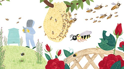 Christine Pym Illustration - christine pym, linocut, watercolour, painted, printed, traditional, trade, picture book, commercial, greetings cards, bee keeper, people, colour, YA, young reader
