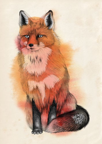 Emily Twomey Illustration - emily twomey, emily, twomey, watercolour, traditional, detailed, painted, paint, fox, animal, colour, colourful, line, black line