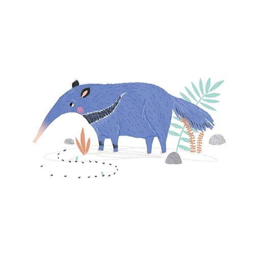 Emma Haines Illustration - emma haines, emma, haines, illustrator, artist, bright, colourful, digital, photshop, hand drawn, colour, funny cute, sweet, anteater, wildlife, animals, plants, flowers