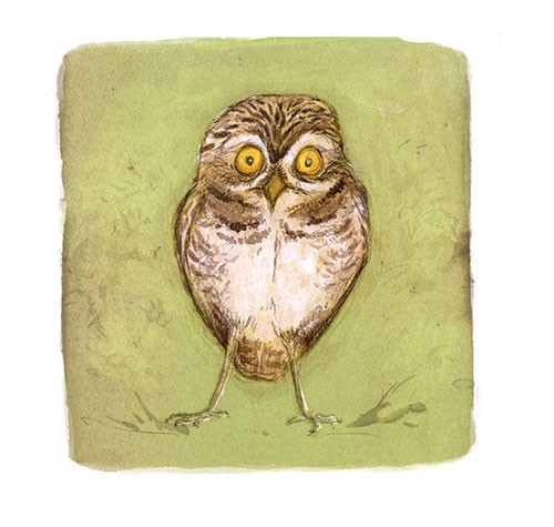 Gabby Grant Illustration - gabby grant, gabby, grant, traditional, digital, picture book, fiction, educational, graphic novel, commercial, painted, classic, owl, bird, wildlife, birds,