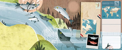 Julio Antonio Blasco Illustration - julio antonio blasco, picture book, colour, colourful, digital, photoshop, texture, print, paint, traditional, non-fiction, learning, educational, animals, wild, geography, world, map, postcard, salmon, fish, river, northern hemisphere, swimming, water,
