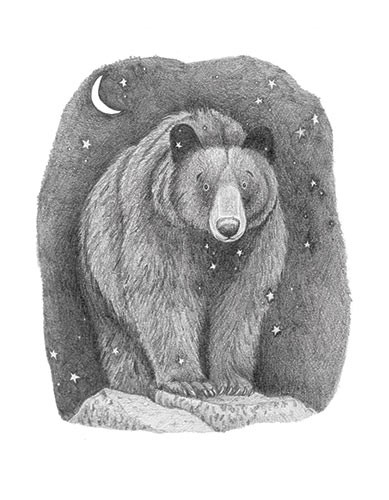 Lucy Boden Illustration - lucy, boden, lucy boden, novelty, mass market, mark making, commercial, pencil, detail, picture book, fiction, animals, bear, wildlife, night, stars, moon, dark,