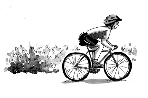 Olivia Palmer Illustration - olivia palmer, olivia, palmer, b&w, black and white, fiction, digital, pen & ink, grey scale, chapter books, ya, young adult,cycling, boys, bicycle, riding, outdoors, helmet