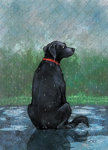 Petra Brown Illustration - petra, brown, petra brown, watercolour, paint, painted, commercial, traditional, trade, picture book, picture book, cute, sweet, dog, rain, labrador, black , collar, cold