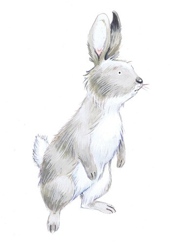 Peter Wilks Illustration - peter, wilks, peter wilks, paint, painted, watercolour, water colour, traditional, commercial, educational, picture book, picturebook, fiction, acrylic, animals, rabbits, bunnies, bunny, bears, deer, deers, fawns