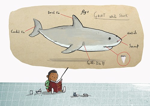 Tom Tinn-Disbury Illustration - Tom, Disbury, Tom Disbury, Digital, Photoshop, Illustrator, educational, fiction, picture book, editorial, advertising, posters, leaflets, brochures, children, child, boy, reading, book, shark, learning, fins, teeth, fish