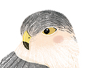 Louise Wright Illustration - louise, wright, louise wright, texture, mixed media, traditional, digital, photoshop, illustrator, trade, mass market, picture book, animal, bird, colour, cute