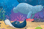 Tim Budgen Illustration - tim, budgen, tim budgen, illustration, picture book, YA, young reader, trade, character, colourful, illustrator, photoshop, cute, ocean, water, underwater, under the sea, whale, fish, ray, swordfish, seal, octopus, pufferfish, eel, crab, starfish, coral