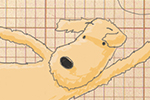 Tom Disbury Illustration - Tom, Disbury, Tom Disbury, Digital, Photoshop, Illustrator, educational, fiction, picture book, editorial, young reader, dogs, flying, kites, trees, graph paper
